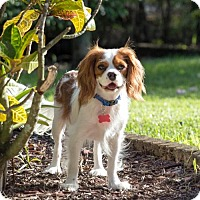 Adopt A Pet :: Brody (Pembroke Pines, FL) - Enterprise, FL