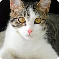 Adopt A Pet :: Tinkerbell - Aiken, SC