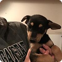 Adopt A Pet :: Eli (Danielle- Camden) - Blossvale, NY