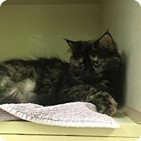 Adopt A Pet :: Rita - Lancaster, PA