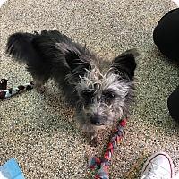 Adopt A Pet :: Hazel - Thousand Oaks, CA