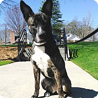 Adopt A Pet :: Emmy - Lawrenceville, GA