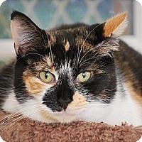 Adopt A Pet :: Guya - Trevose, PA