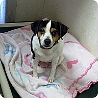 Adopt A Pet :: Cool Whip - Geneseo, IL