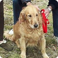 Adopt A Pet :: Simba - Cheshire, CT
