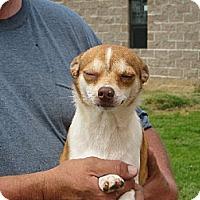 Adopt A Pet :: Peppers - Westport, CT