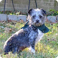 Adopt A Pet :: Cindy - Mocksville, NC