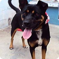 Adopt A Pet :: Nami - San Diego, CA