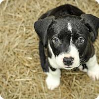 Adopt A Pet :: Ginny Weasley - Gainesville, FL