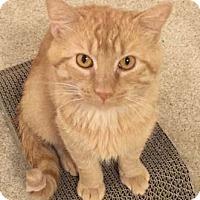 Adopt A Pet :: Gus - Merrifield, VA