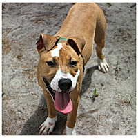 Adopt A Pet :: Iris - Forked River, NJ