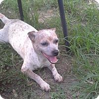 Adopt A Pet :: Tami - Bedminster, NJ