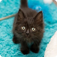 Adopt A Pet :: Frisco - Fountain Hills, AZ