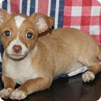 Adopt A Pet :: Cheese: Pepperjack - Palo Alto, CA