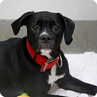Adopt A Pet :: Summer - Kettering, OH