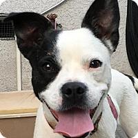 Adopt A Pet :: COCOA - Lakewood, CA