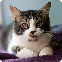 Adopt A Pet :: Jo Jo - Avon, NY