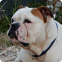 Adopt A Pet :: Mason - Long Beach, NY