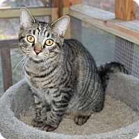Adopt A Pet :: Rambo - Youngsville, NC