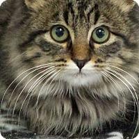 Adopt A Pet :: Nickel - Sauk Rapids, MN