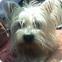 Adopt A Pet :: Karlee - Bucks County, PA