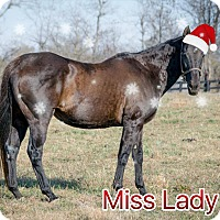 Thoroughbred for adoption in Nicholasville, Kentucky - Holiday Special-Miss Lady Fan