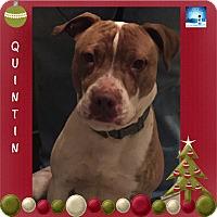 Adopt A Pet :: Quintin - Washington, PA