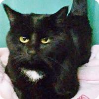 Adopt A Pet :: Zeke - Franklin, NH