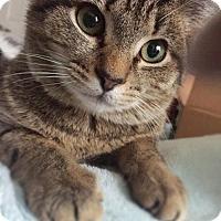Adopt A Pet :: Lindsey *Video* - Philadelphia, PA