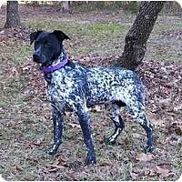 Adopt A Pet :: Myka - Mocksville, NC