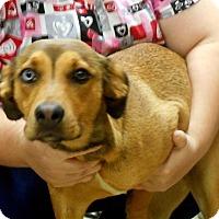 Adopt A Pet :: Ruca - Alexandria, VA
