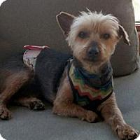 Adopt A Pet :: Sydney - Omaha, NE