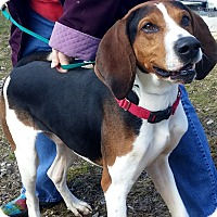 Adopt A Pet :: Jackson - Delaware, OH