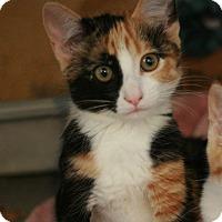 Adopt A Pet :: Paradise - Canoga Park, CA