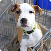 Adopt A Pet :: Arlo-Adopted! - Detroit, MI