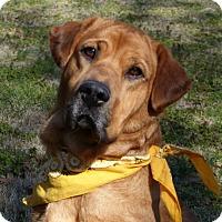 Adopt A Pet :: Courtni - Mocksville, NC