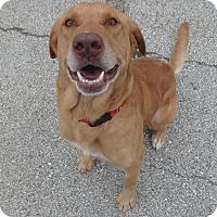 Adopt A Pet :: Cooper - Seguin, TX