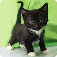 Adopt A Pet :: Hestia - Austin, TX