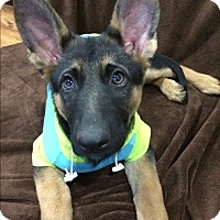 Adopt A Pet :: Gabby-Adopted! - Detroit, MI