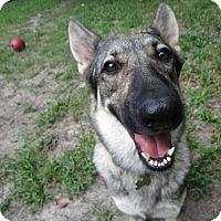 Adopt A Pet :: Luna - Green Cove Springs, FL