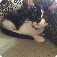 Adopt A Pet :: Poe - Topeka, KS