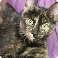 Adopt A Pet :: Annabelle - Medina, OH