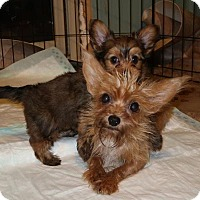 Adopt A Pet :: Rosey AND Rascal - Bedminster, NJ