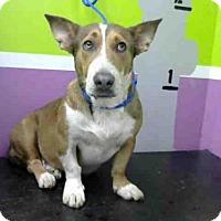 Adopt A Pet :: A1427509 - Houston, TX