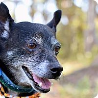 Adopt A Pet :: Pepper - Summerville, SC