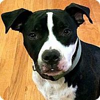 Adopt A Pet :: Roamey - Nashville, TN