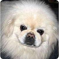Adopt A Pet :: Prince - Mays Landing, NJ