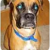 Adopt A Pet :: Zena - Thomasville, GA