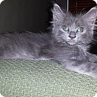 Adopt A Pet :: Jamie - Chandler, AZ