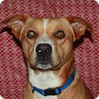 Adopt A Pet :: Tucker - Marion, AR
